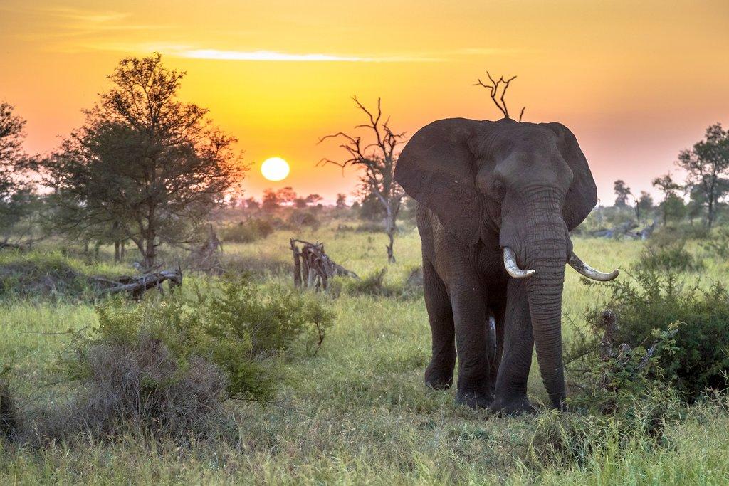 Kruger_National_Park
